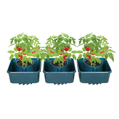 Set of 3 Tomato Grow Pots